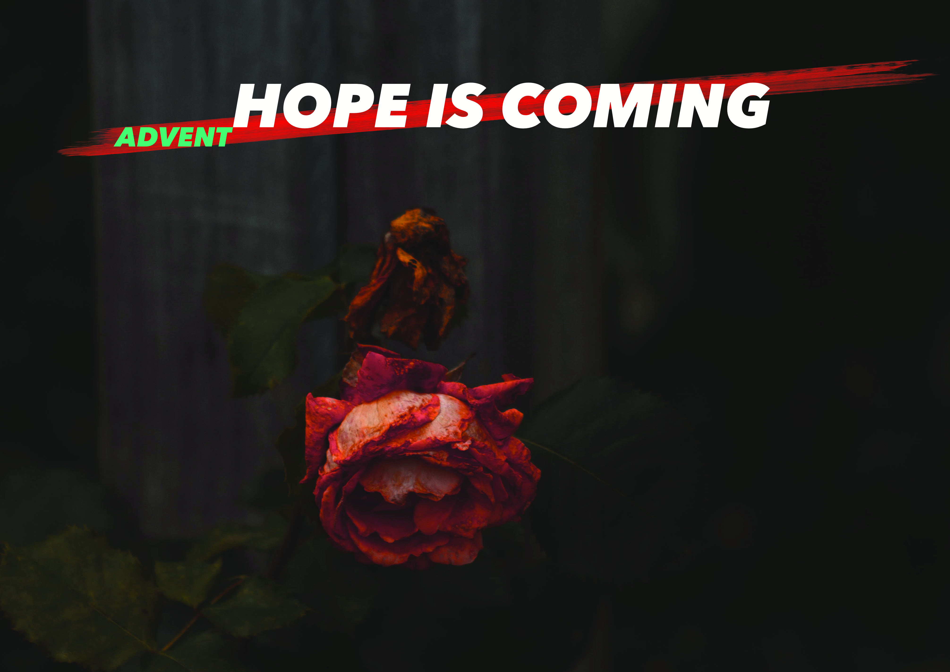 Advent 2019: Hope Is Coming
